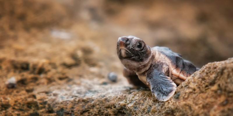 turtle-activity-puerto-vallarta