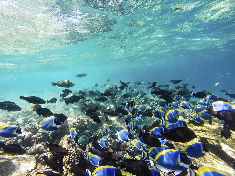 Breathtaking Underwater Creatures