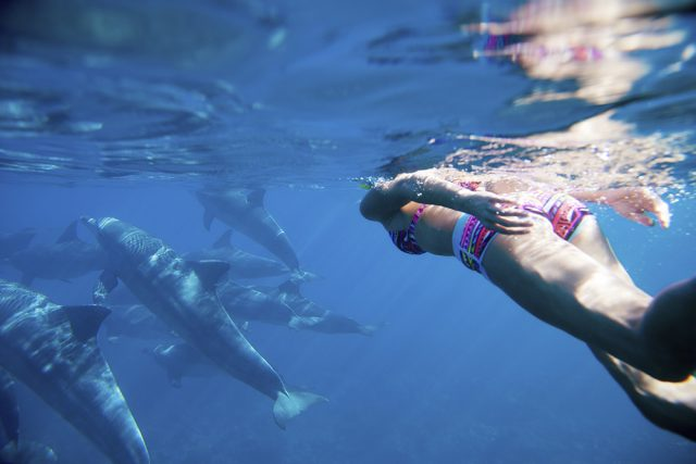 Tips for swimming with dolphins