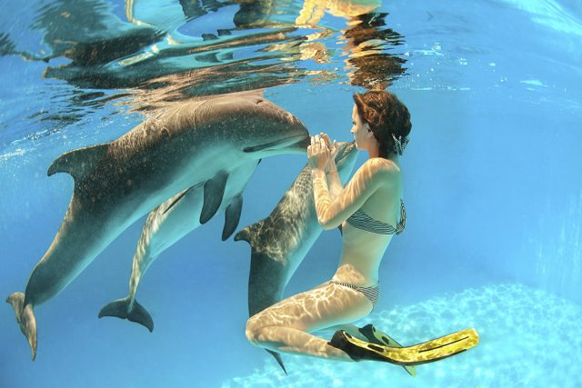 What to expect when swimming with dolphins
